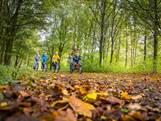 Top 10 Last Minutes Landal parken in binnen- en buitenland