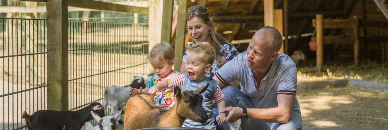Landal parken met kinderboerderij / dierenweide