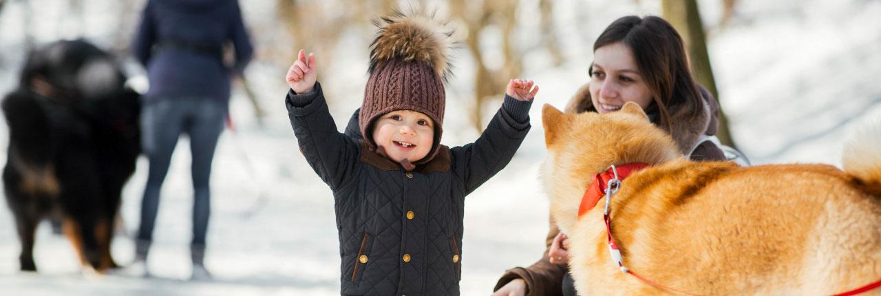 Dogsincluded.nl kan je helpen bij het vinden van een vakantiepark waar je met je hond vakantie kunt vieren zonder vuurwerkoverlast