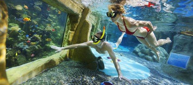Vrouw en man genieten van het snorkelen in het Leven in Zee-bad koraalbad van het Aqua Mundo zwembad van Center Parcs De Kempervennen