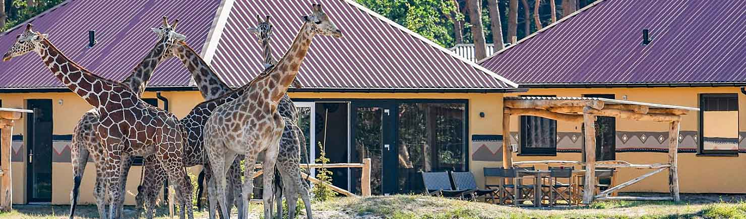 Safari Resort Beekse Bergen: Tot 25% Korting + gratis extra's