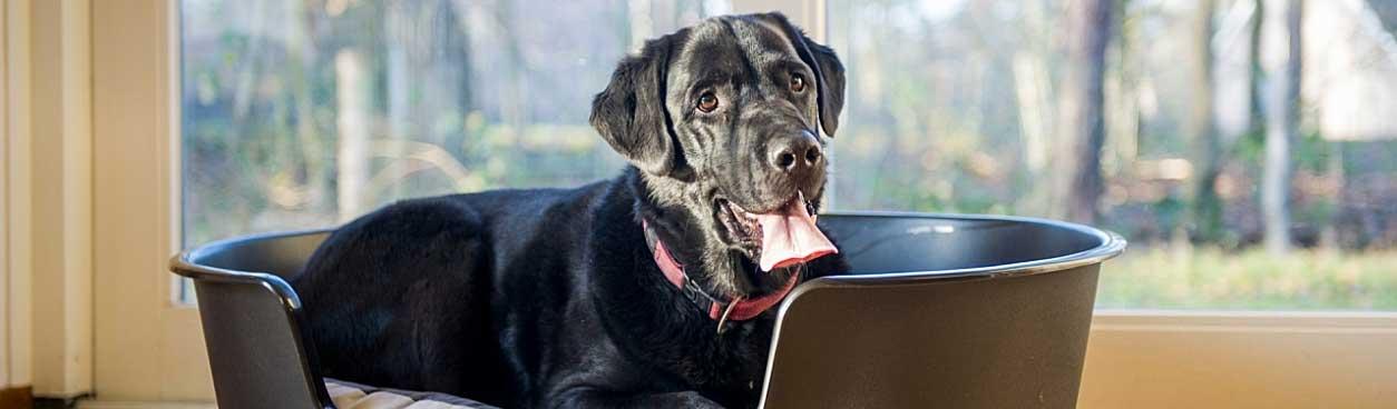 Hondenbungalows Landal GreenParks voor leuke vakantie met hond