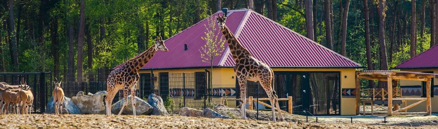 Safari Resort Beekse Bergen: Tot 15% Korting + GRATIS extra's