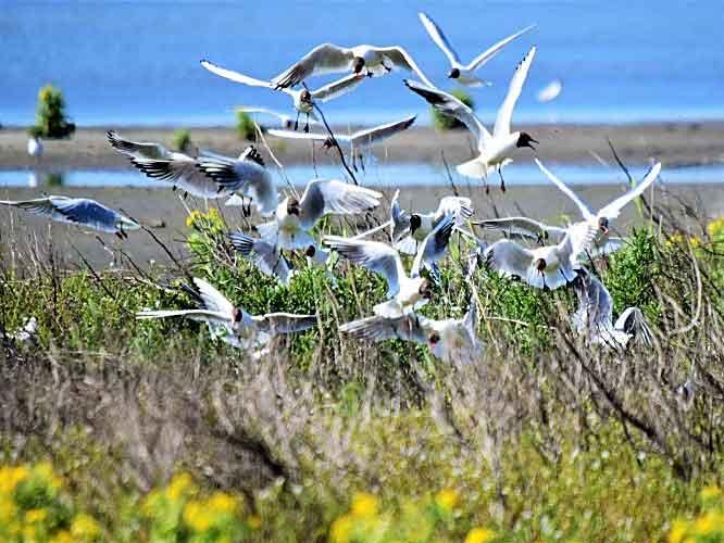 Vogels spotten op het Haveneiland van Marker Wadden? Ga zeker eens naar de uitkijktoren of één van de vogelkijkhutten