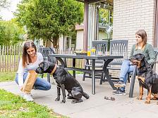 Alle hondenbungalows van Landal GreenParks op een rij